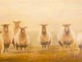 Clarissa - Herd