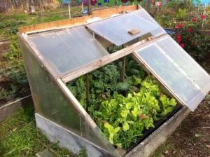 Jim Millisky's Winter Veggie Garden Solution!